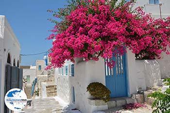 Chora Astypalaia (Astypalea) - Dodekanes -  Foto 99 - Foto von GriechenlandWeb.de