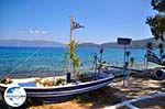 GriechenlandWeb.de Karavomilos Sami - Kefalonia - Foto 209 - Foto GriechenlandWeb.de