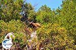 GriechenlandWeb.de Antisamos - Antisami - Kefalonia - Foto 243 - Foto GriechenlandWeb.de