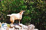 GriechenlandWeb.de Antisamos - Antisami - Kefalonia - Foto 247 - Foto GriechenlandWeb.de