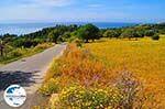 GriechenlandWeb.de Trapezaki - Kefalonia - Foto 343 - Foto GriechenlandWeb.de