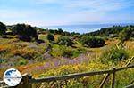 GriechenlandWeb.de Trapezaki - Kefalonia - Foto 344 - Foto GriechenlandWeb.de