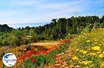 GriechenlandWeb.de Trapezaki - Kefalonia - Foto 346 - Foto GriechenlandWeb.de