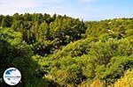 GriechenlandWeb.de Trapezaki - Kefalonia - Foto 347 - Foto GriechenlandWeb.de