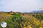 GriechenlandWeb.de Lixouri Halbinsel Paliki - Kefalonia - Foto 536 - Foto GriechenlandWeb.de
