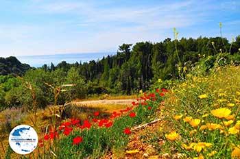 Trapezaki - Kefalonia - Foto 346 - Foto von GriechenlandWeb.de