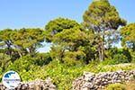 GriechenlandWeb.de Agios Leon Zakynthos | Griechenland | GriechenlandWeb.de nr6 - Foto GriechenlandWeb.de