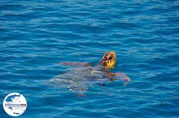 Caretta Caretta Laganas Bucht | Griechenland | GriechenlandWeb.de nr 5 - Foto von GriechenlandWeb.de