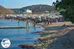GriechenlandWeb.de Panormos Mykonos - Kykladen -  Foto 12 - Foto GriechelandWeb.de