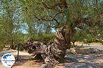 GriechenlandWeb.de Exo Chora Zakynthos - Ionische Inseln -  Foto 8 - Foto GriechenlandWeb.de
